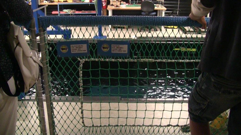 Exemple de maillage qui évite les effets d'étirement et facilite l'évasion de poissons non ciblés.